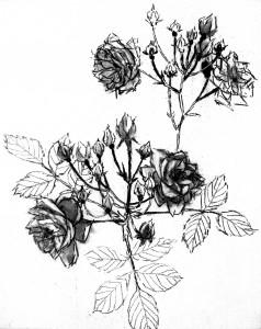 maria-rosas-salvajes-ii-junio-2014-41x33cm