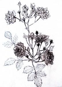web-maria-rosas-salvajes-iii-junio-2014-46x38cm-r